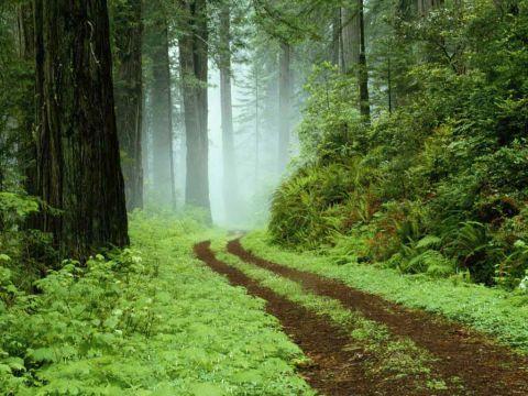 Misiunea Alser Forest